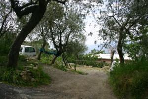 foto gli ulivi di Elia 095