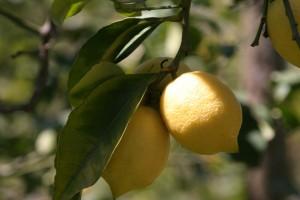 limoni (2)